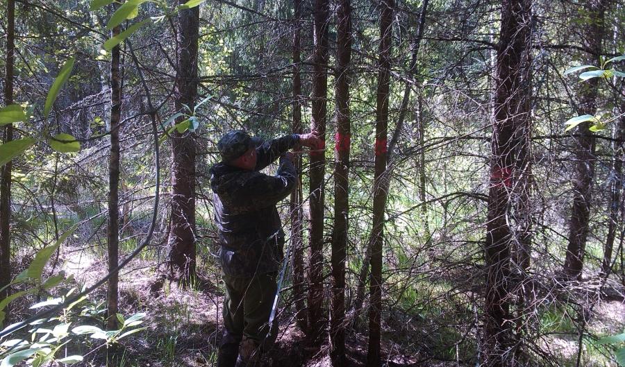 Обмер деревьев